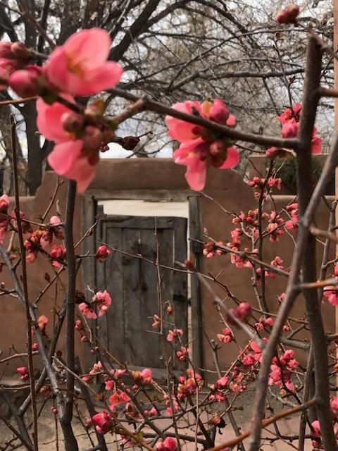 Corrales Spring