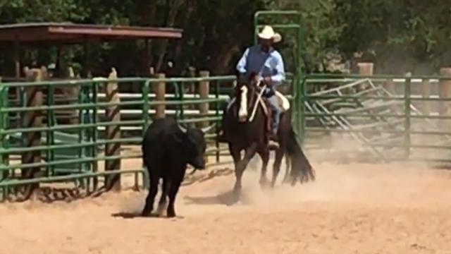 Cowboy in North Valley Albuquerque