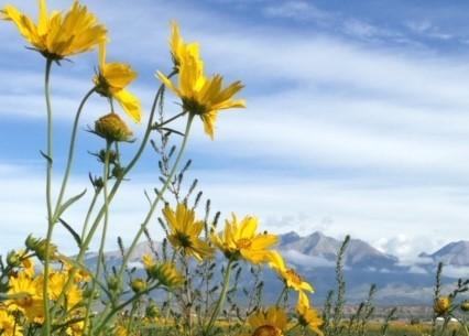 Sandias & Sunflowers